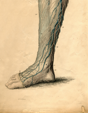 Nerve Disorders of the Foot and Ankle